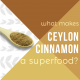 Cinnamon-Powder-blog