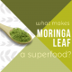Moringa-Powder-blog