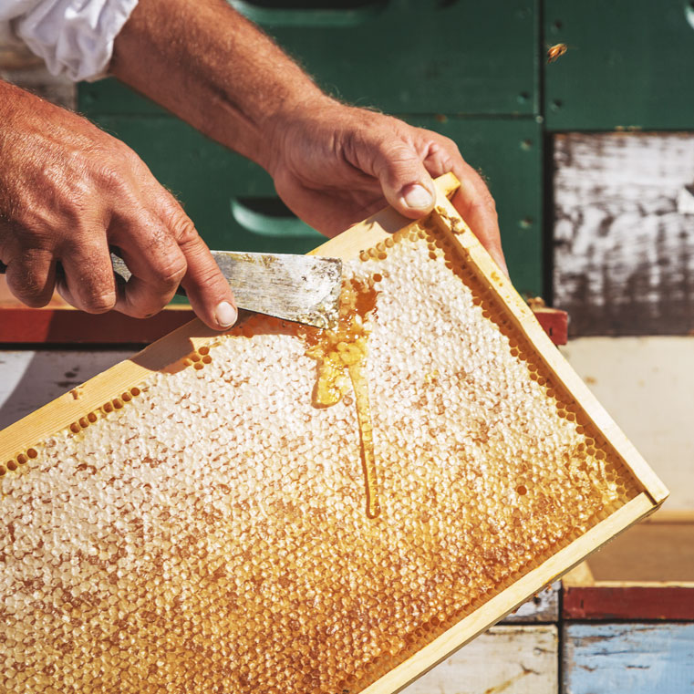 honey frame filled with honey